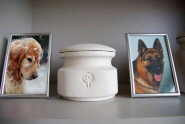 Кремация домашних животных в Москве