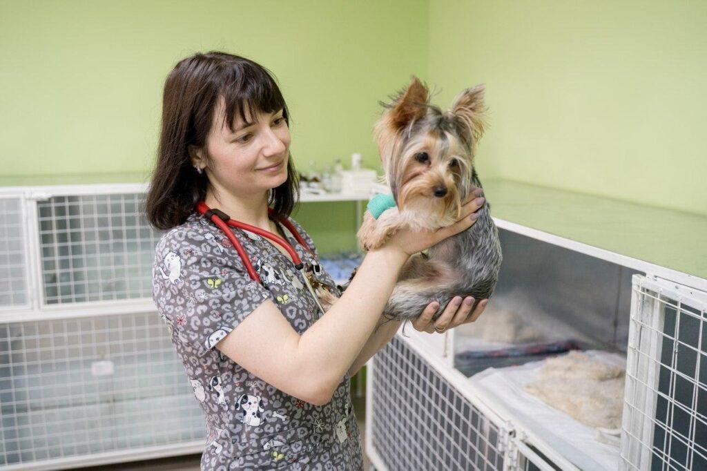 Кастрация стерилизация животных
