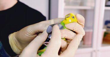 """Лечение птиц в Москве в ветеринарной клинике """"Добрый Хвост"""""""