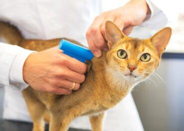 Чипирование домашних животных в Челябинск