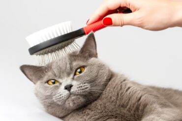 Подстричь кошку в Москве