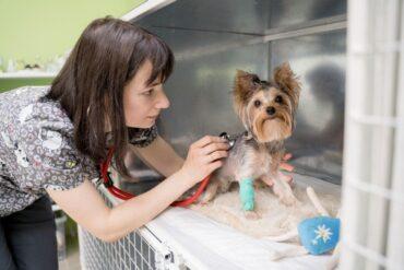 показания к рентгену у животных: