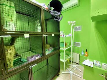 Ветеринарный стационар в Москве