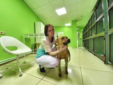 Ветеринарная ортопедия в Москве